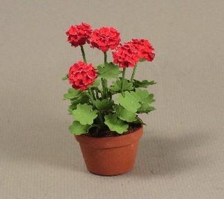 Полезные комнатные растения для дома