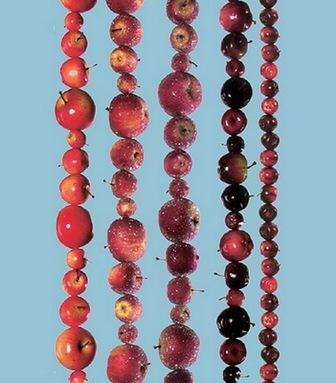 яблочная гирлянда