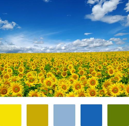 сочетание желтого с голубым и синим в интеьере